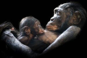 gorilla nursing skin to skin with baby